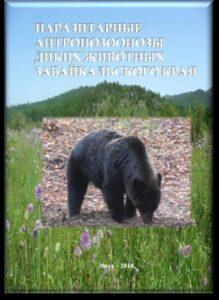 Книга с медведем