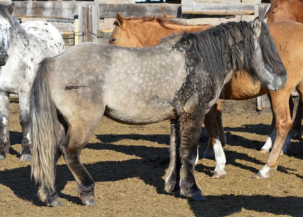 horse4